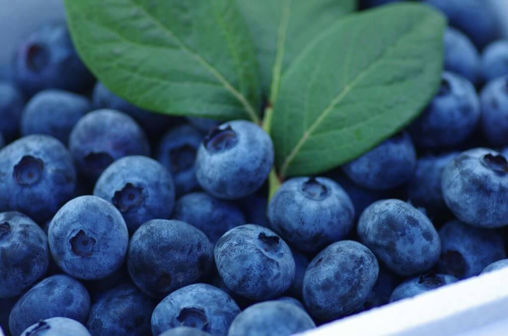 青く光る宝石サファイアのように美しいブランド果実ブルーベリー森のサファイア