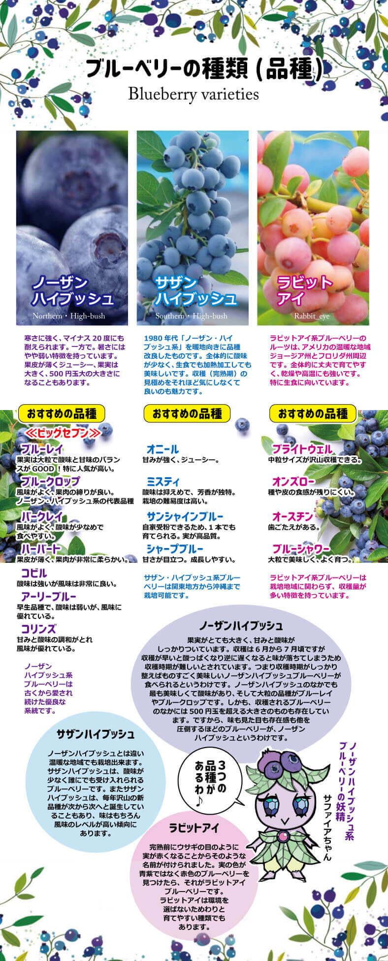 ブルーベリーの品種の紹介